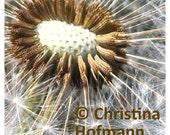 Eye of the Dandelion - instant digital download image