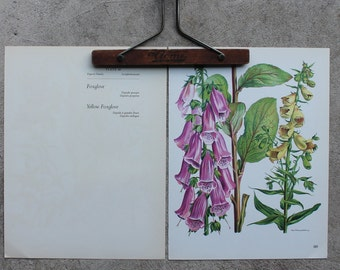 Vintage Flower Plate, Foxglove, Botanical Illustration 1968