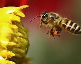 Worker Bee CSA