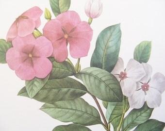Flower Print - Pierre Joseph Redoute - Pink White Vinca - Pervenche - Vintage Flower Print - Botanical Print - Periwinkle - Victor  - No 98