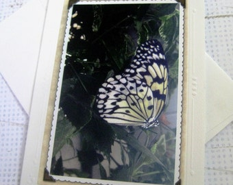 Photo Greeting Card, Striped Butterfly Yellow and Black in Mist, Blank Inside, All Occasion Notecard, Embossed 5x7 Size with Envelope