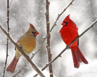 25 Postcards Snowy Cardinals Birds Male & Female Art Photo Christmas Holiday Greeting Cards