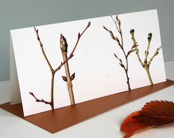 Winter Branches, Botanical greetings card