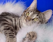 2014 Cat Adoption Calendar Featuring Adoptable Cats