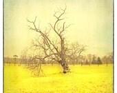 Tree Photography, Yellow Print, Wall Decor, Wall Hanging, Wall Art, Landscape Photograph - 8x8