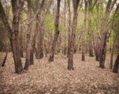 Woodland Photo  - Timber Photography -  Woodland Photography - Landscape - Spring Photo