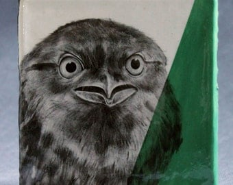 Hand Painted Tawny Frogmouth Portrait Wall Tile Leaf Green