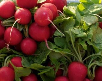 Organic Cherry Belle Radish Seeds