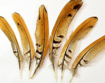 """Ringneck Pheasant Quill Wing Feathers - Natural, 4""""-6"""" (6pcs)#5F"""