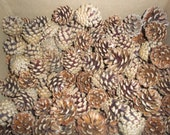 "50 Count Pine Cones From 1"" up to 2"" Long"