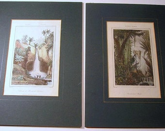 TWO Antique DANVIN Hand Colored Engravings, 19th Century Exotic Art, Jungle Engravings, Antique French Engravings, Antique Prints