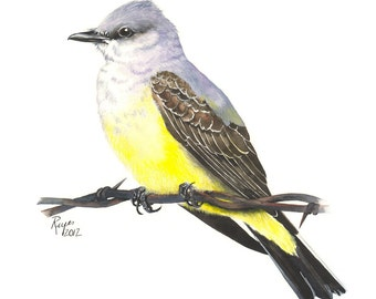 Limited Edition GICLEE Print / Watercolor Painting of a Western Kingbird