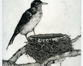 Robin at Nest, Original Aquatint Etching