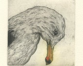 California Gull, Fine Art Etching of seagull