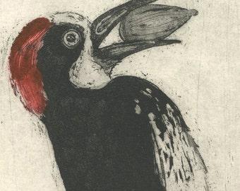 Acorn Woodpecker, Original Fine Art Etching