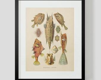 Vintage Ocean Life Fish Print