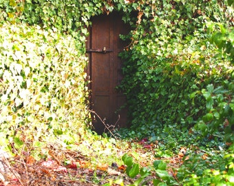 Fine Art Photograph Secret Door Vines California