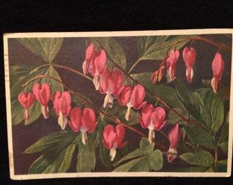 Pink Bleeding Heart Flowers  - Plant - Botanical - Spring Flower
