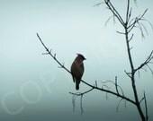 Silhouette Fog Cedar Waxwing Bird Nature Photography Woodland Ornithologist Minimalist Wall Art