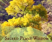 Sacred Plant Wisdom vol. 12: Cottonwood Tree - Stillness, Ceremony, Grace and Flow