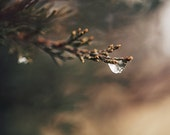 """Dew Photograph - Nature Tree Photograph - Green, Sage, Brown - Rustic Home Decor - Fine Art Photography - """"Winter Dew"""""""