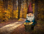 Bearded Garden Gnome on an Autumn Michigan Forest Path with a Harvest Basket of Mushrooms No.0171 A Surreal Fantasy Fine Art Photograph