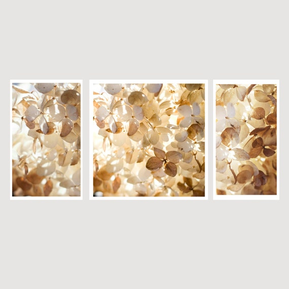 Three piece set, Nature, Hydrangea, Naturals, Ivory, One 12x12, Two 7x12's, Home decor, Wall Art