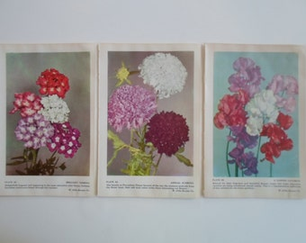 Vintage 1960s Flower Garden  SET of THREE  Book Plates Photograph Wise Garden Instant Collection