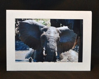 Original Photography Note Card - Elephant 2