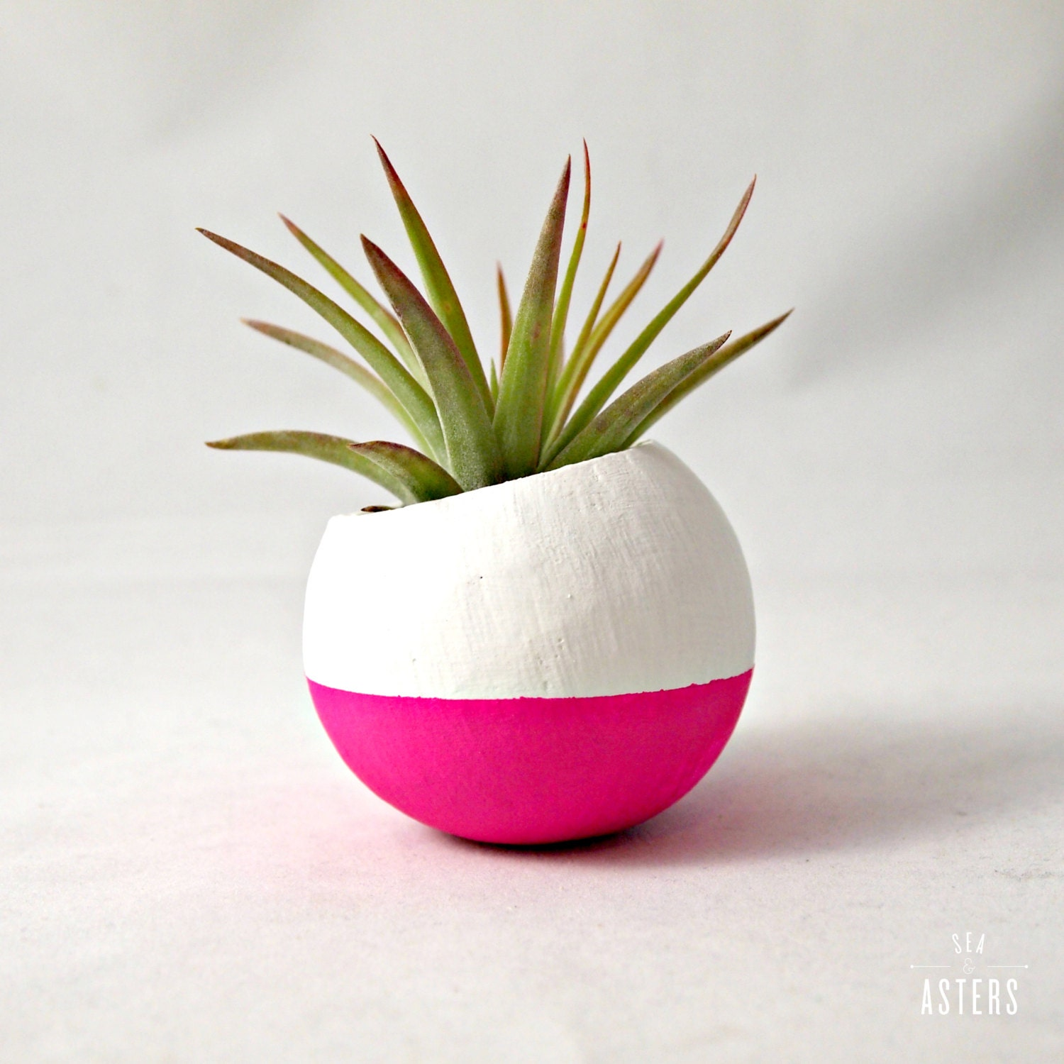Mini Air Plants : Mini air plant pod neon pink white colorblock with