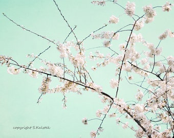 Cherry Blossom Photograph Pale pink Blossoms Pale Mint Aqua Print Modern Botanical Wall Art 8x10