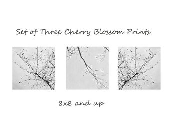 Set of Three Cherry Blossom Photographs, Black and White Elegant Nature Prints, Blossoming Tree Print set of 3, 8x8 and up