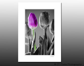 Tulips Still Life Print, mothers day gift, flower photography, Matted Print, fits 5x7 inch frame