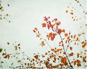 Orange tree branch photo leaves, tree photo, nature photography, Autumn Photo, fall foliage, leaves, dramatic, dreamy photo, ethereal