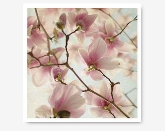 Pink Magnolias, Magnolia Photo, magnolia blossoms, nursery art, fine art photo, nature print, pink and blue, feminine, petals, spring art