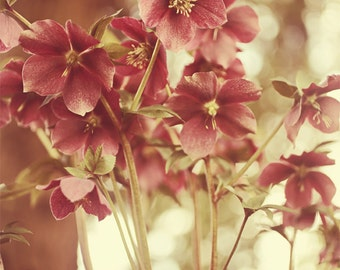 Hellebores bunch in the woods pink and green flower photography nature photography
