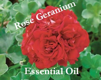 ROSE GERANIUM Therapeutic Grade Essential Oil (Organic) CHOOSE 1/2 oz. or 1 oz. size - Full Strength, Pure