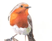 Robin Watercolor Painting 2014- bird print of watercolor painting - A4 print wall art print - bird art - art print - wildlife print R7515