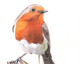 Robin Watercolor Painting 2014- bird print of watercolor painting - A4 print wall art print - bird art - art print - wildlife print R7515