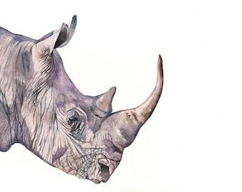 Rhinoceros PAINTING -2014   Print of watercolor painting 5 by 7 print