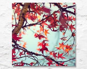 autumn photograph red orange leaves fine art photography fall aqua sky nature photo wall decor season