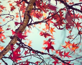 autumn photograph red orange leaves fine art photography fall aqua sky nature photo wall decor season