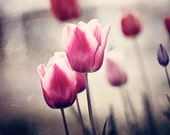 """Tulip Wall Art - vertical pink red beige dark black brown flower photography floral nature photo modern botanical decor, """"Blessed Earth"""""""