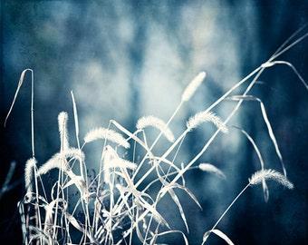 "Blue Nature Print, dark blue navy white botanical photo grass colorful wall art cream modern fine art photograph monochromatic, ""Denim"""