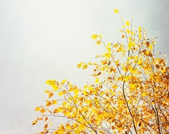 "Yellow, Grey Photography, gray nature wall art yellow picture branches leaves modern photo large colorful tree botanical, ""Yellow & Grey"""