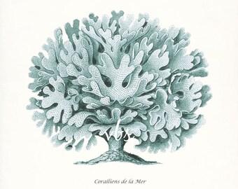 Coastal Decor  E. Haeckel Fantasy Sea Coral Giclee Art Print No. 2 8x10 sea glass
