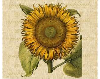 Sunflower printable graphicYellow instant Digital download image for scrapbook iron on fabric transfer burlap decoupage tote pillows No.2154