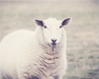 White Sheep, White Lamb, Lamb Photo, Lamb Art, Lamb Photography, Sheep Art, Sheep Photo, Sheep Gift, Sheep Photography, Nursery Room Art