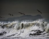 California Surf, beach scene, 8x12 fine art photography, pelicans and waves, ocean photography, Mummy Island