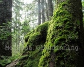 Maines Mossy Forest photo print